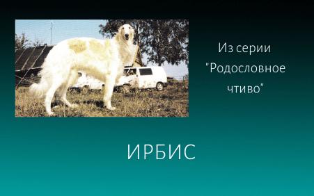 Ирбис Елена Дымченко