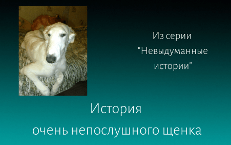 Алекс или история непослушного щенка Елена Дымченко